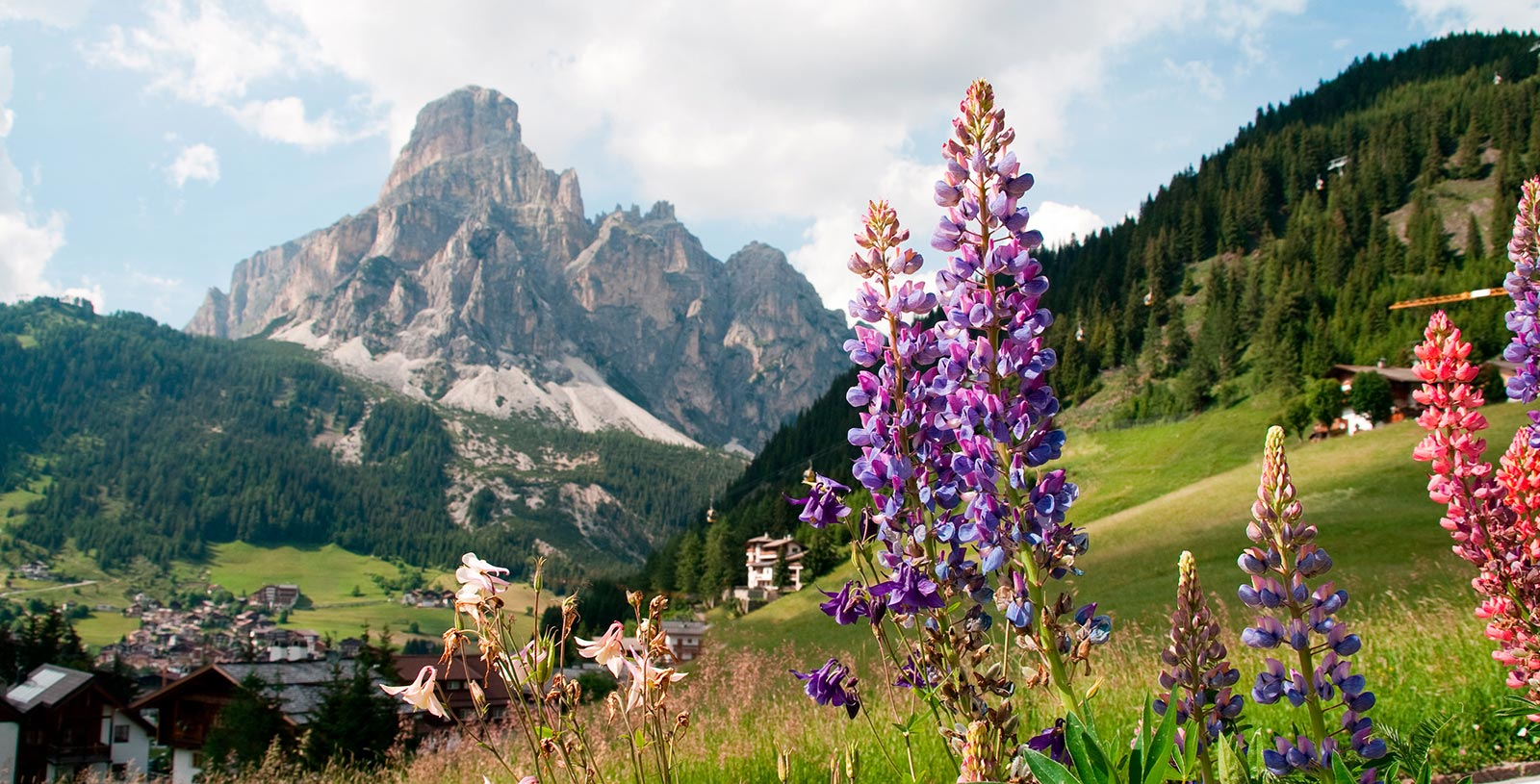 the alps of Alta Badia, in the foreground flowers on a meadow